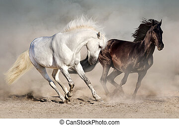 Two horse in desert