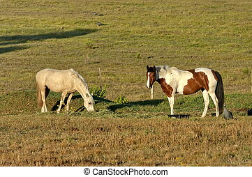 Two horse in morning pasture