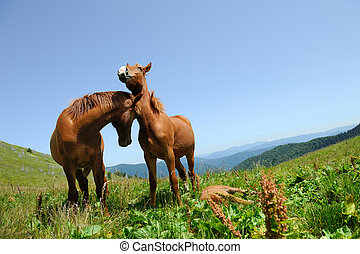 Two horse in mountain