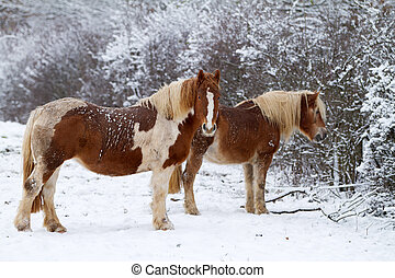 Two Horse on snow