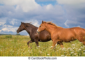 two horse running together in field