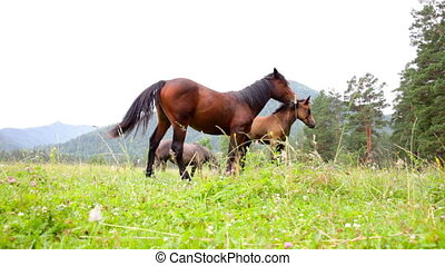Two horses and foal are grazed on a green meadow