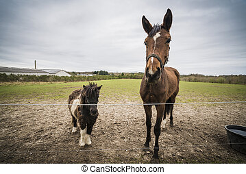 Two horses behind a fence