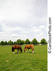 Horses grazing on the meadow