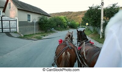 Two horses in a cart with the eyes of a groom.