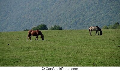 Two horses in a meadow