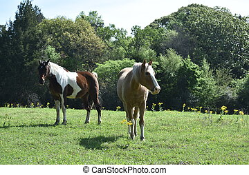 two horses in an open field