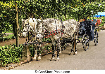 Two Horses in carriage