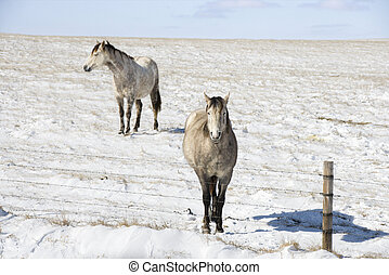 Two horses in snow.