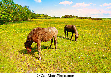 Two horses in the fields