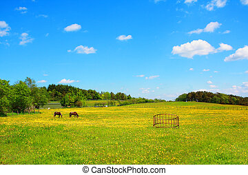 Two horses in the Spring meadow