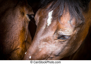 Two horses in their stable