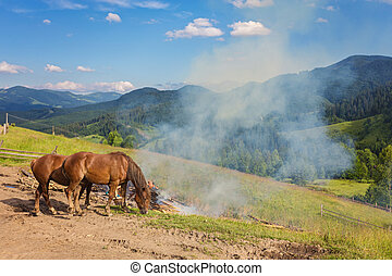 two horses on a pasture