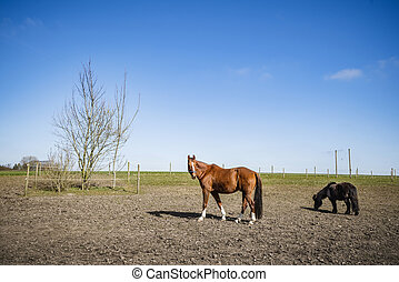 Two horses on a rural field