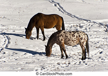 Two Horses On A Snowy Field