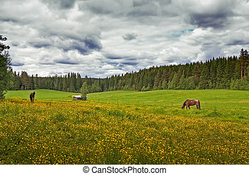 Two Horses On A Summer Field