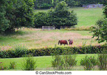 Two horses on the pasture