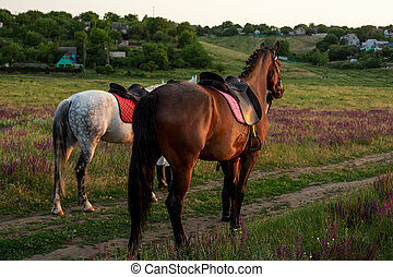 Two horses outdoor in summer happy sunset together nature