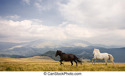 Two horses running on a field