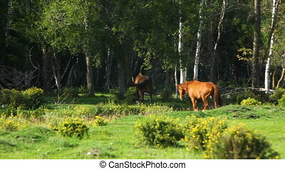 Two horses run in the wood