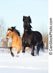 Two horses run in winter gallop