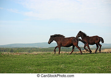 two horses running on field