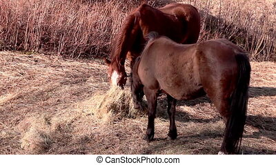 Two horses sharing the grasses