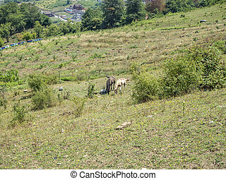 Two horses sit on a meadow