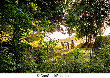 two horses standing in a green glade in the sunset