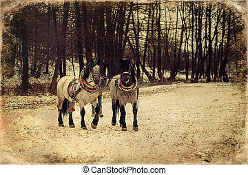 Two horses with ornate harness, old photo effect. - Two ...
