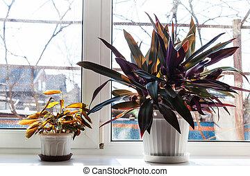 two houseplants in white pots on window sill