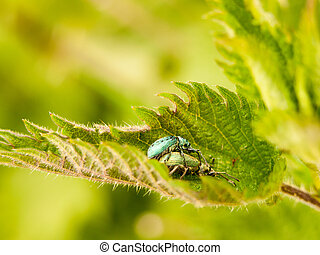 two insects resting on each other in a leaf