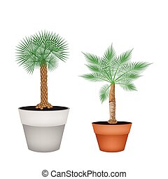 Two Isometric Palm Trees in Terracotta Pots - Houseplant,...