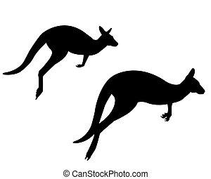 two kangaroo - Two kangaroos on a white background