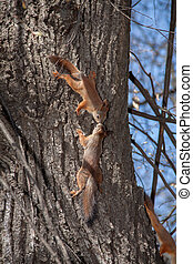 Two kissing squirrel on a tree against the blue sky