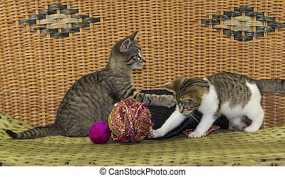 Two kitten are plkaying with a ball.