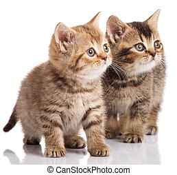 Two kitten on a white background