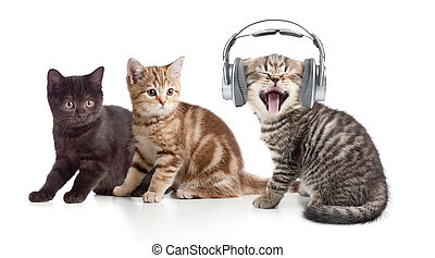 Two kittens and little cat listening to music in headphones