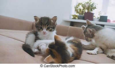 two kittens are played on the couch slow motion video....