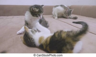 two kittens are played on the couch. two kittens bite each...