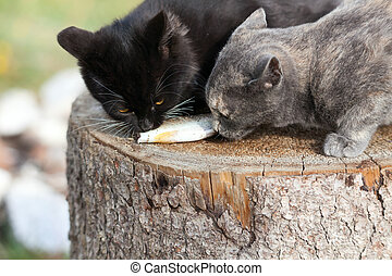 Two kittens eat fish.