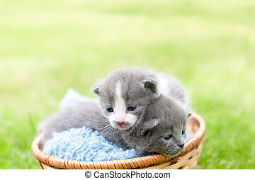 Two kittens in a garden