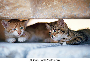 Two kittens in the shadow of stone