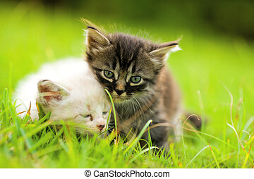 Two kittens sitting in grass close together