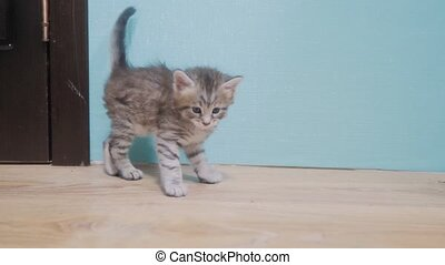 two kittens playing fighting running after each other cute...