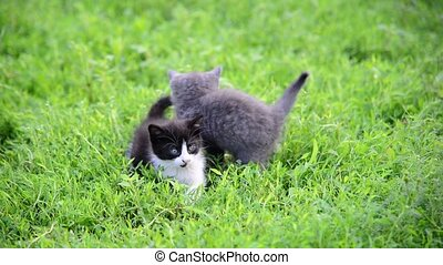 two kittens playing in grass on the lawn