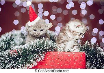 Two kittens wearing santa hat sitting on gift box