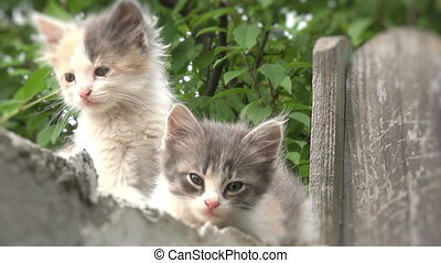 two kitties on a fence blurred