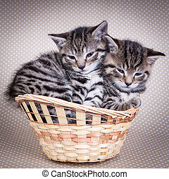 Two kittins sitting in a basket together