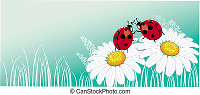 Two ladybirds on the chamomile